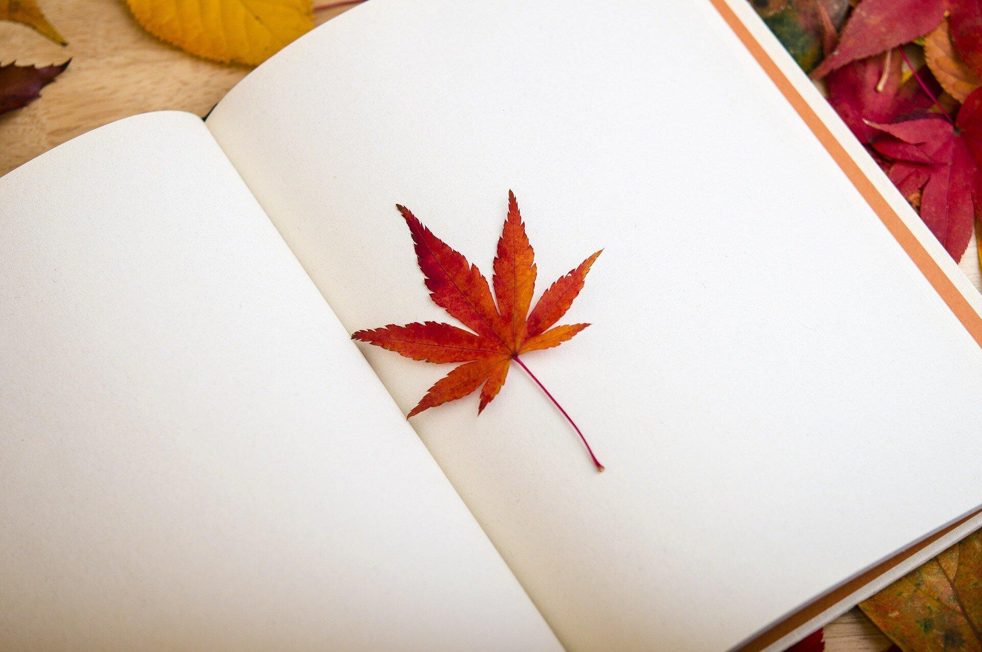 maple-leaf-638022_1920